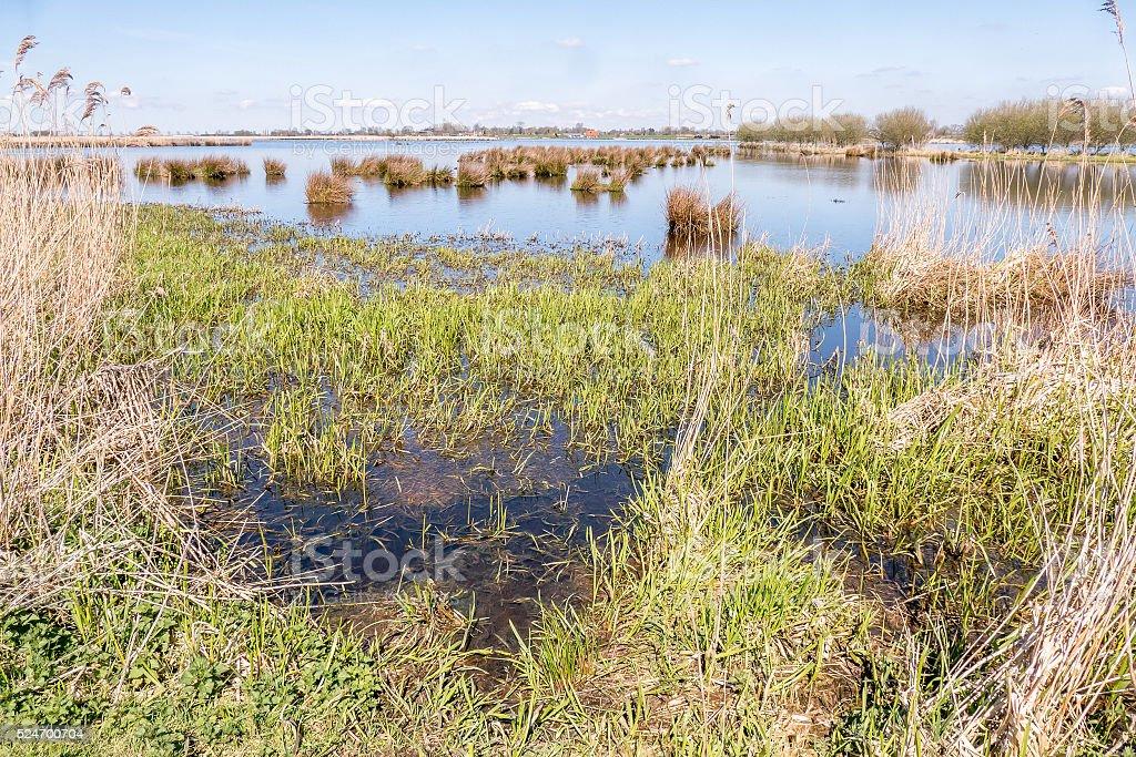 Marsh Landscape. stock photo