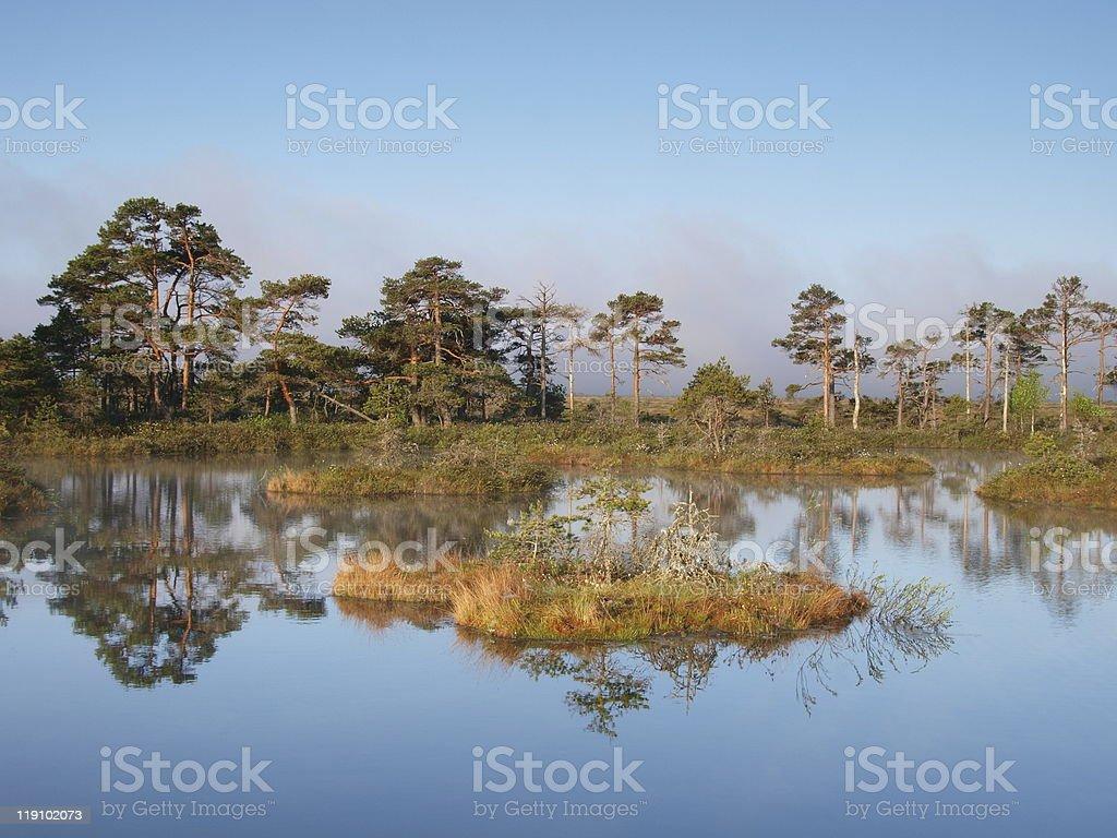 Marsh pool royalty-free stock photo
