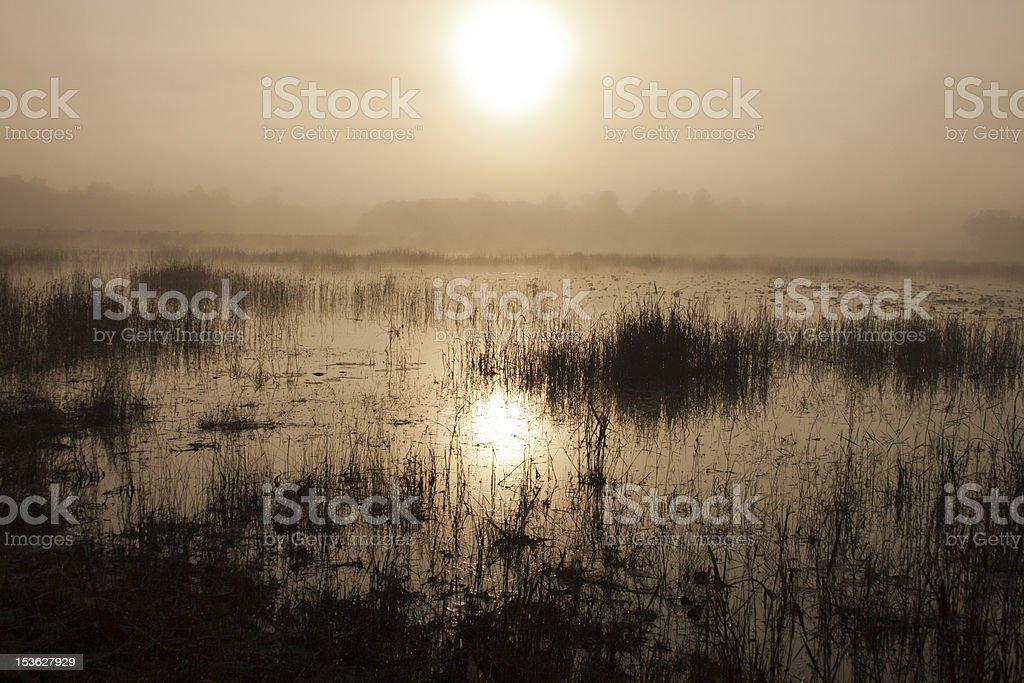 Marsh Sunrise stock photo