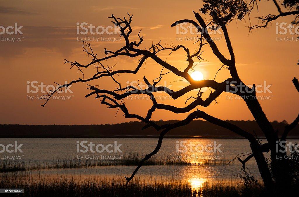 Marsh Sunset royalty-free stock photo