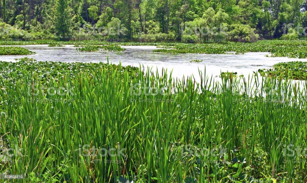 Marshes of Michigan stock photo