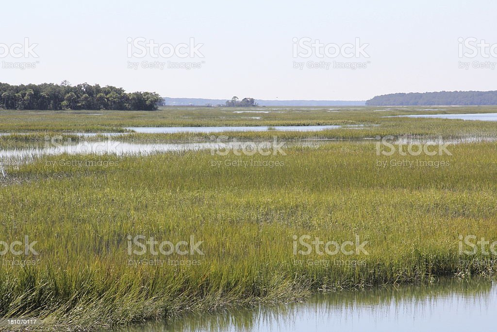 Marshes of North Carolina royalty-free stock photo