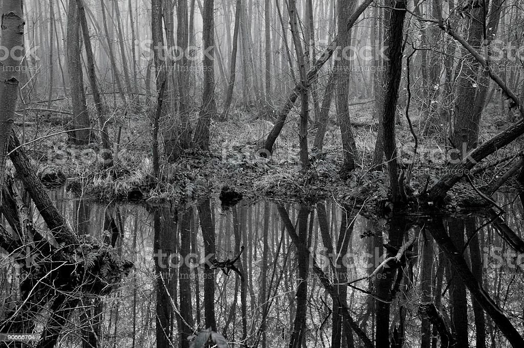 Marshes royalty-free stock photo