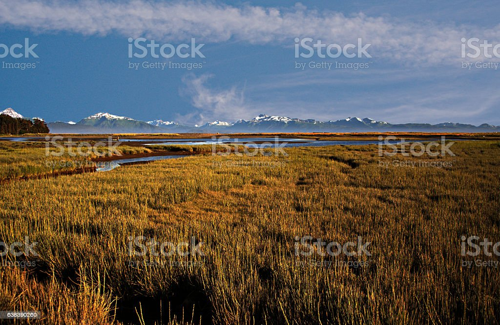 Marshes with Mountain Background stock photo