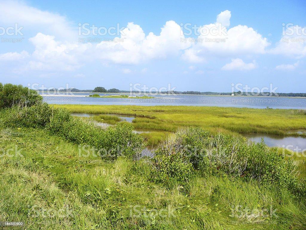 Marshland in Summer stock photo