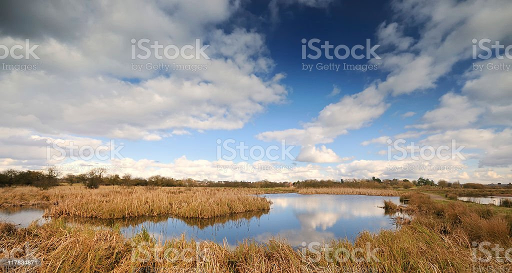 Marshland landscape royalty-free stock photo