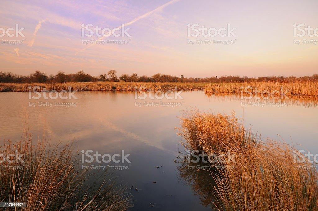Marshland landscape royalty-free stock photo
