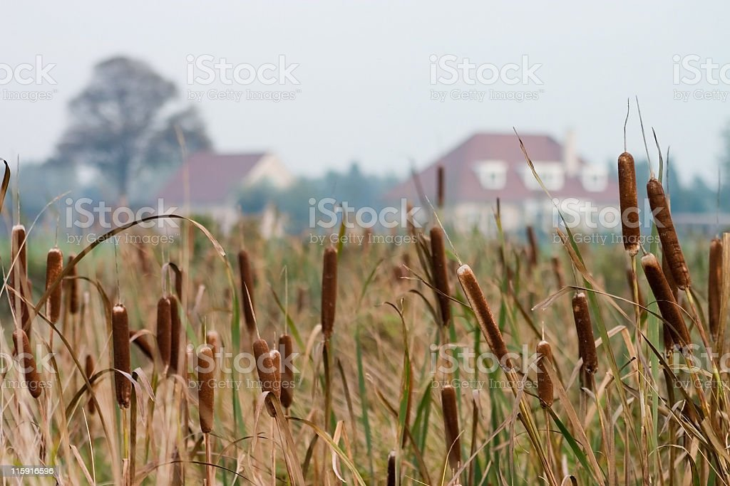 Marshland stock photo
