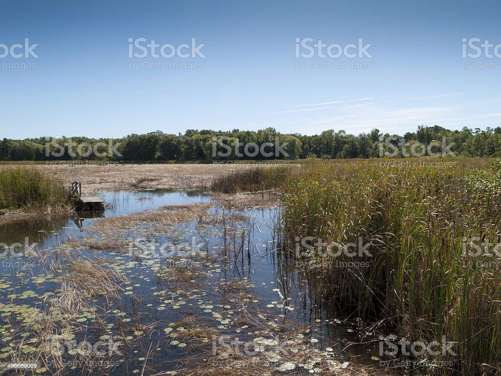 Marshland royalty-free stock photo
