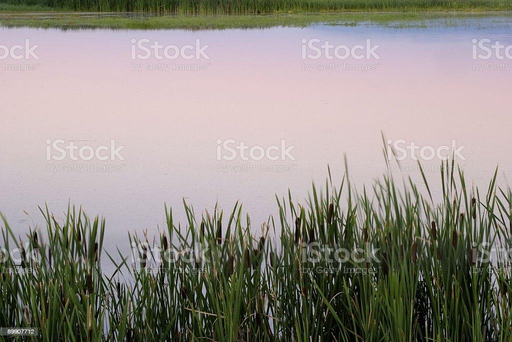 Marshland Reflections royalty-free stock photo