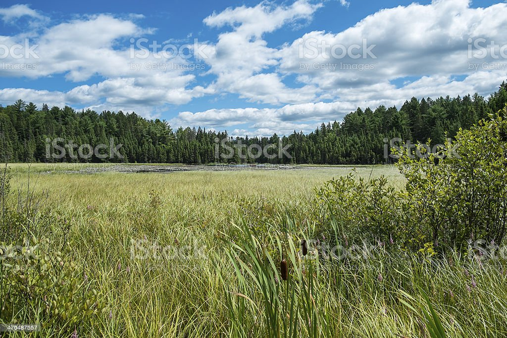 Marshland with Dramatic Sky stock photo