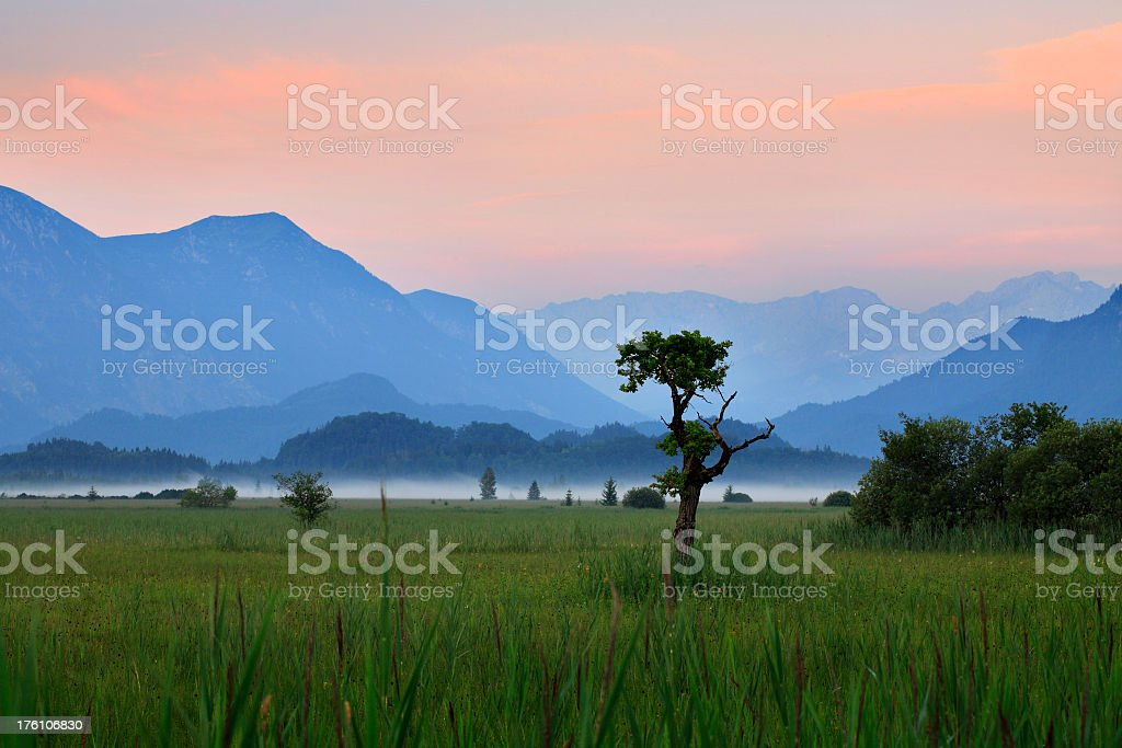 Marshland with Morning Mist in Front of Mountains at Dawn stock photo