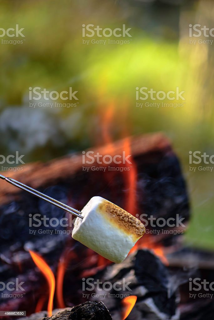 Marshmallows by the campfire stock photo