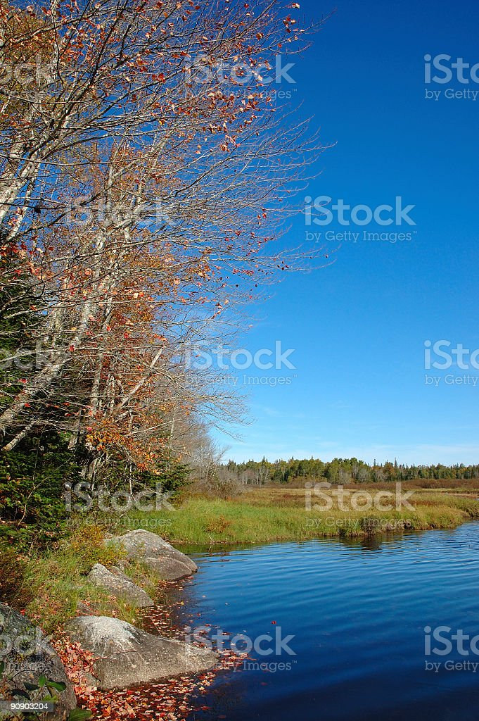marshy autumn lake royalty-free stock photo