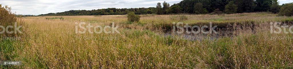 Marshy Grasslands royalty-free stock photo