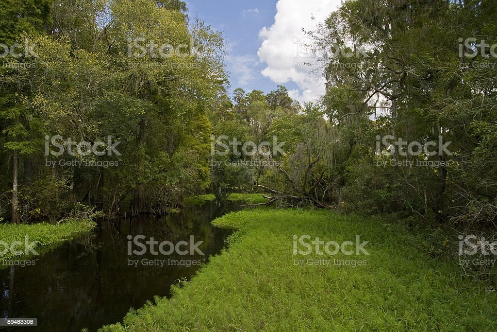 Marshy River Bank with Trees stock photo