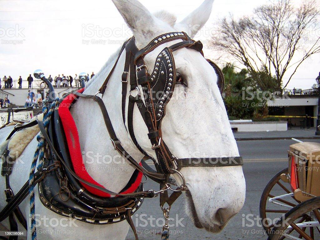 Marti Gras Horse stock photo