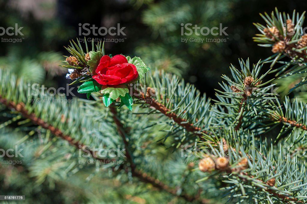 Martisor on the coniferous branch stock photo