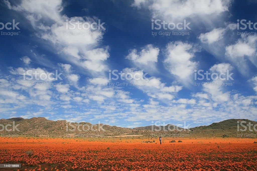 Marvellous Namaqualand stock photo
