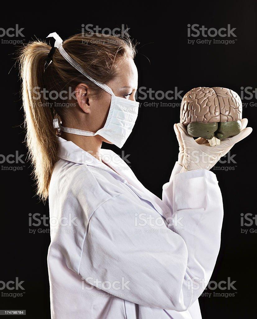 Masked female medical professional examines model brain stock photo
