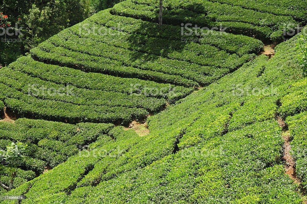 Maskeliya,Sri Lanka. royalty-free stock photo