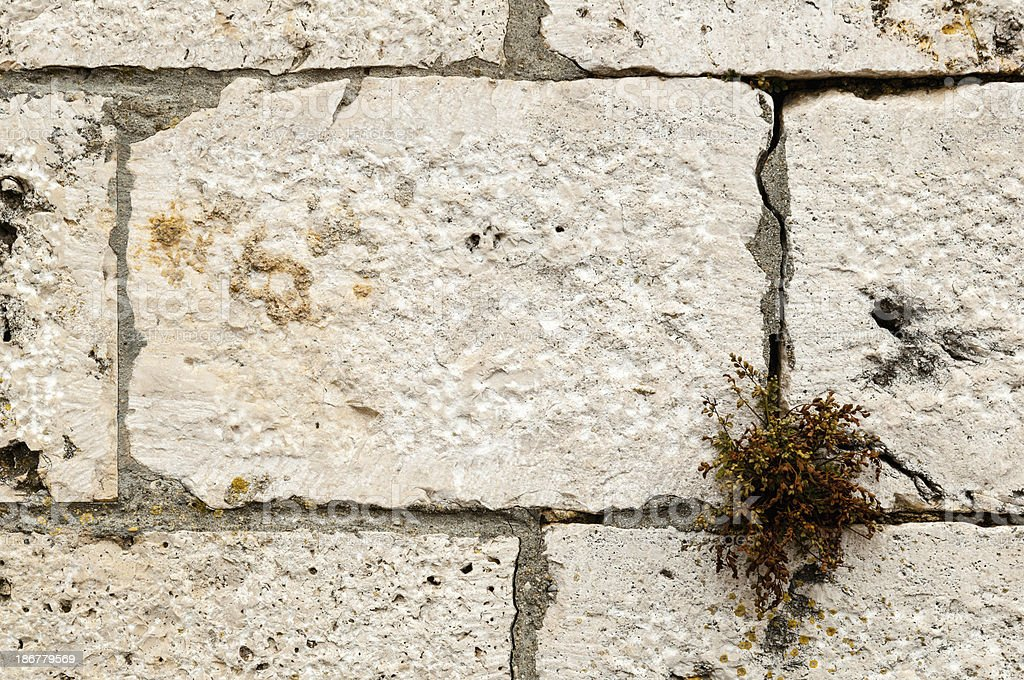 Masonry hewn limestone, a plant growing out of crack stock photo