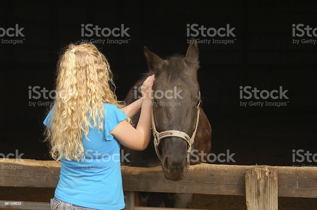 Soothing a Sick Horse stock photo