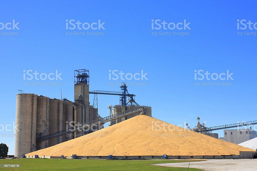 Massive Corn Pile by Iowa Grain Elevator stock photo