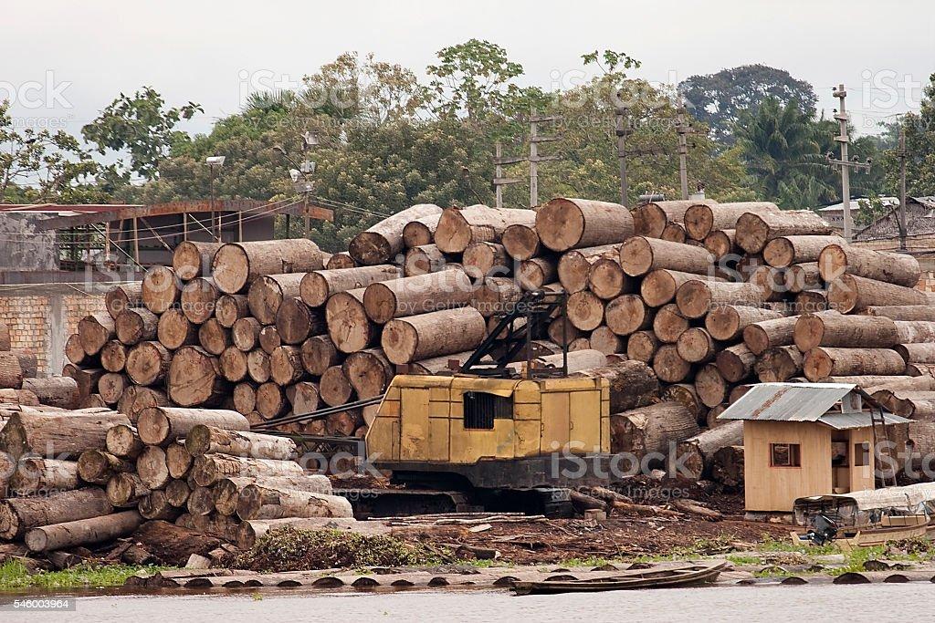 Massive logged trees cut Iquitos sawmill Peru Amazon River logging stock photo