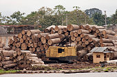 Massive logged trees cut Iquitos sawmill Peru Amazon River logging