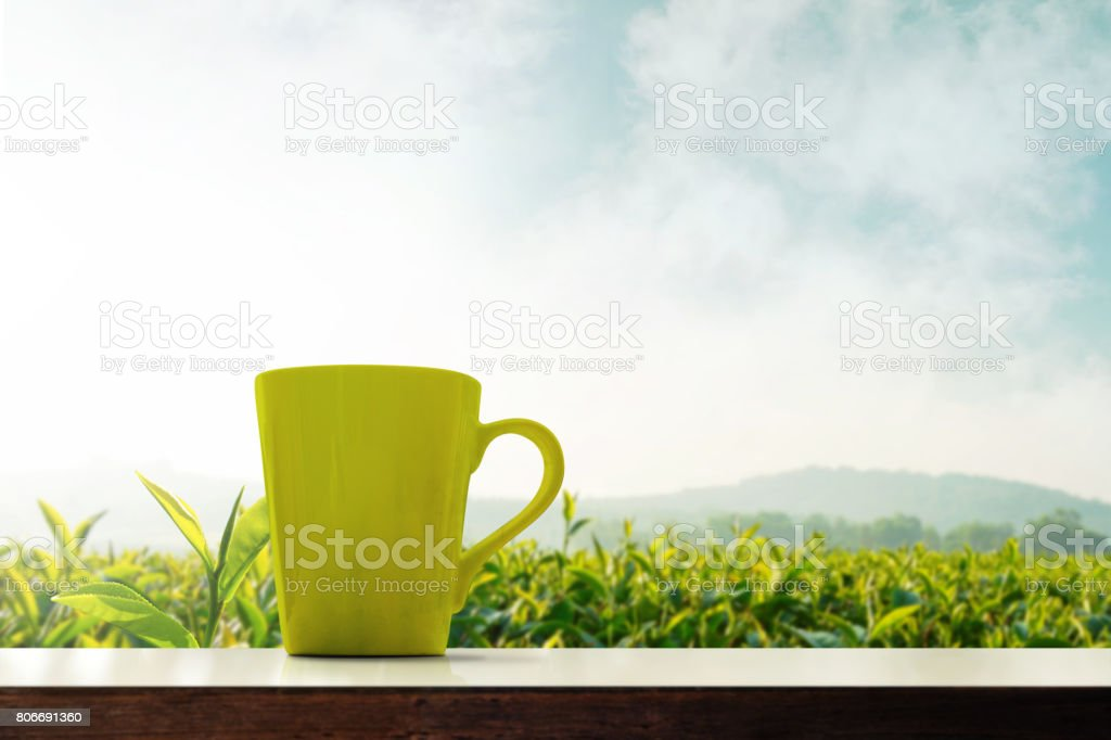 Matcha green tea cup present over plantation organic farm, Morning scene and fog covering mountain landscape, Low angle stock photo
