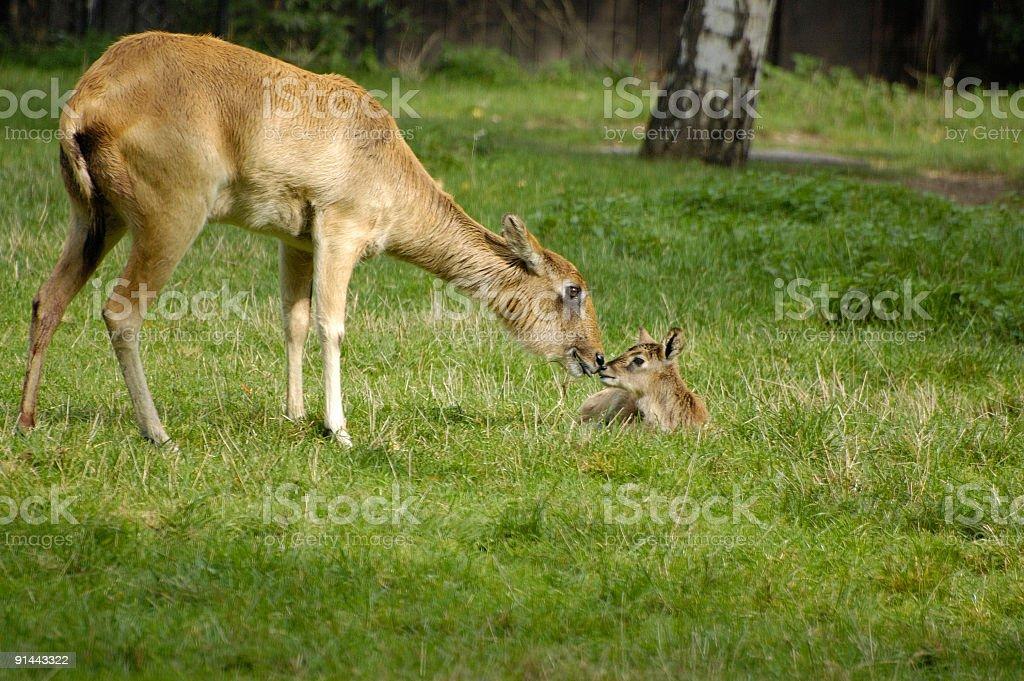 maternity royalty-free stock photo