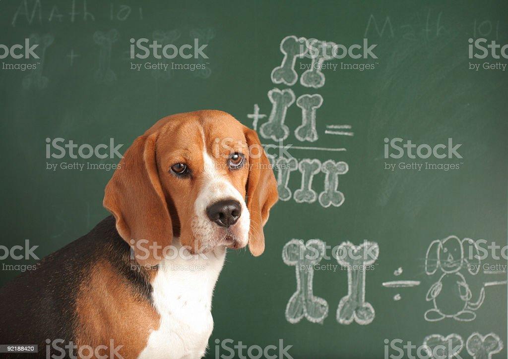 Math 101 stock photo