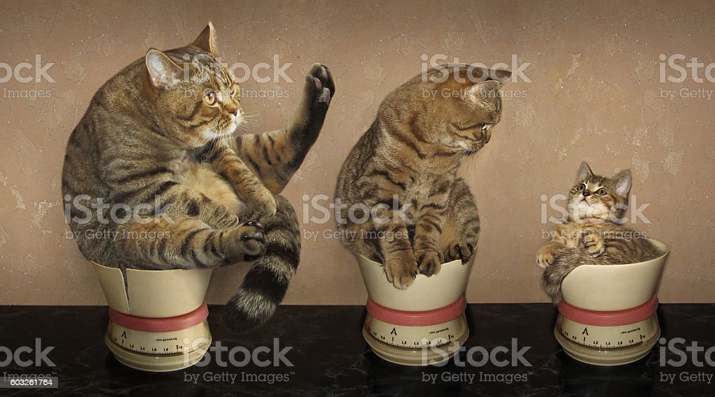 Mather father son stock photo