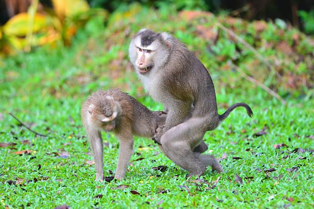 mating animals animal monkey similar royalty