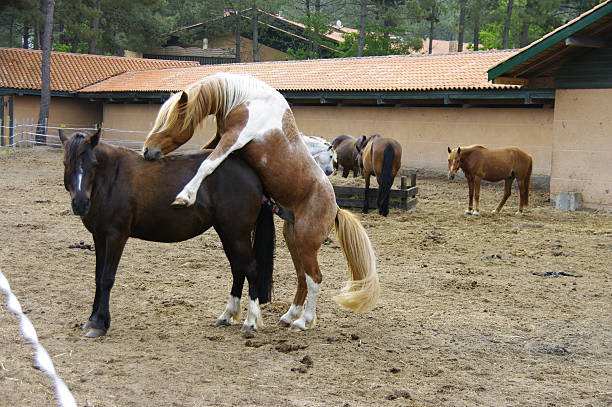 Horse Intercourse Pictures, Images and Stock Photos - iStock