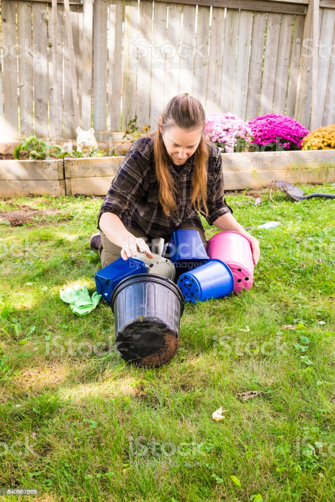 Mature Aged Woman Working In A Fall Flowerbed stock photo