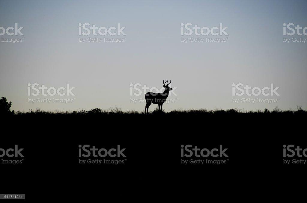 Mature Buck in Silhouette stock photo