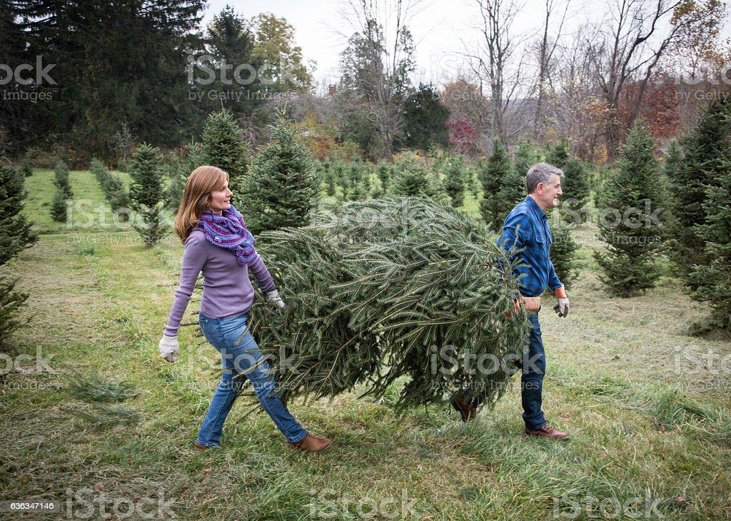 Mature Couple at Christmas Tree Farm stock photo