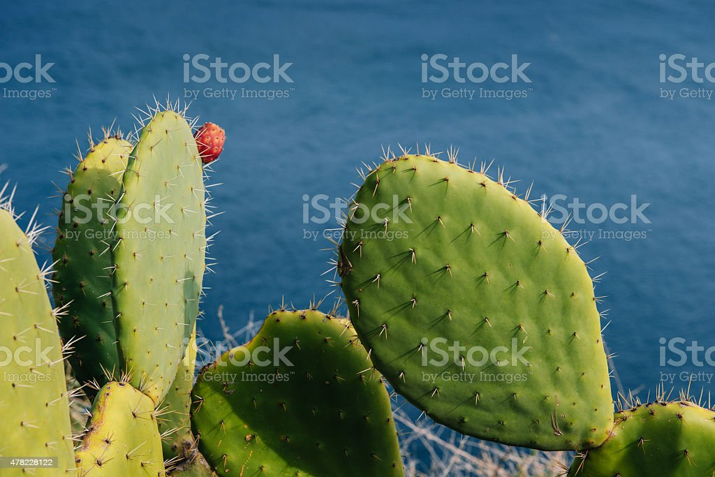 Mature couple Barbed cactus and fruit against blue water stock photo
