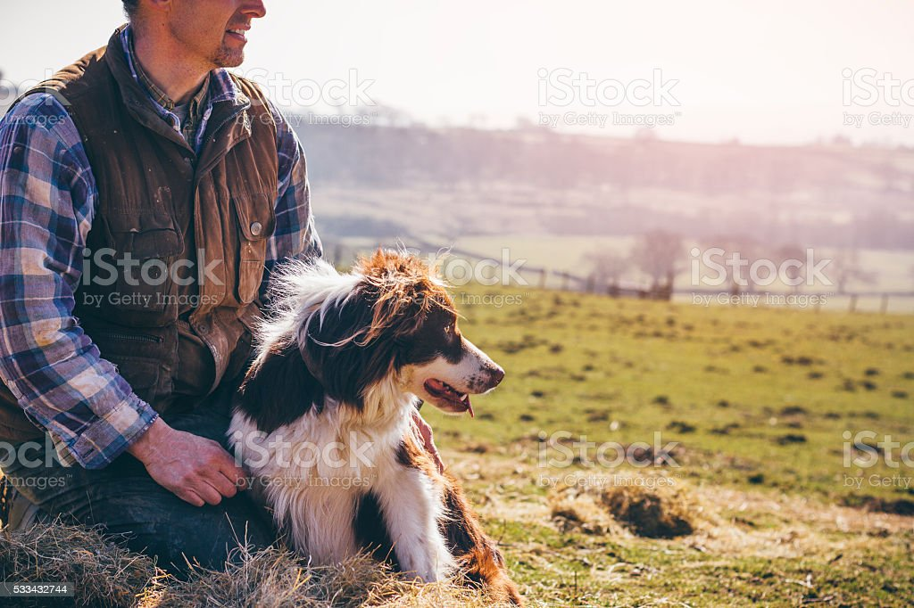 Mature Farmer and His Sheepdog stock photo