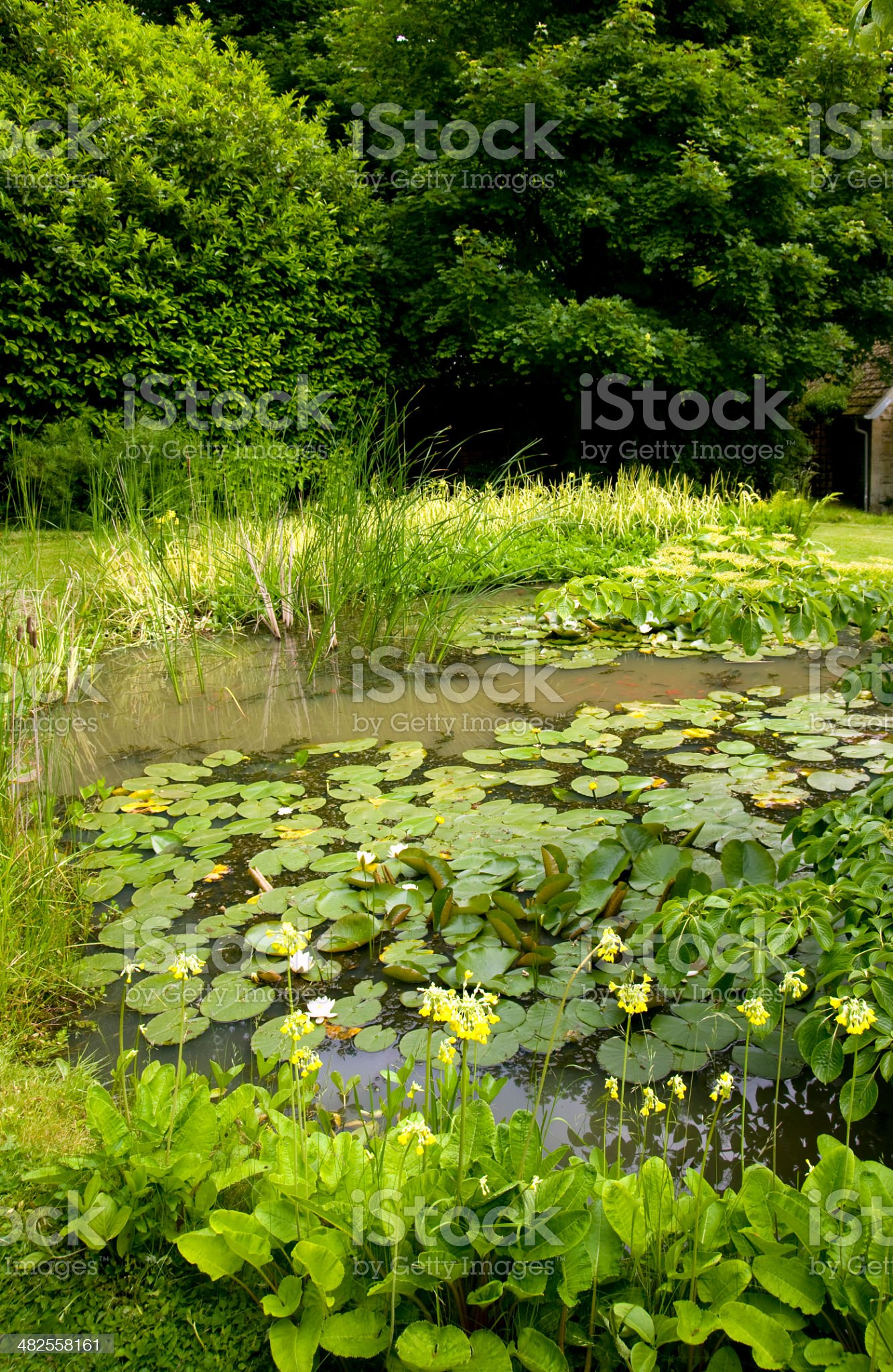 Mature garden pond royalty-free stock photo