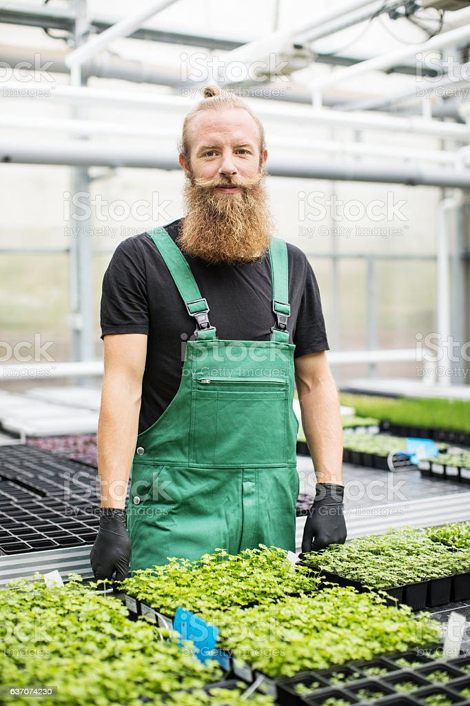 Mature male worker standing in greenhouse stock photo