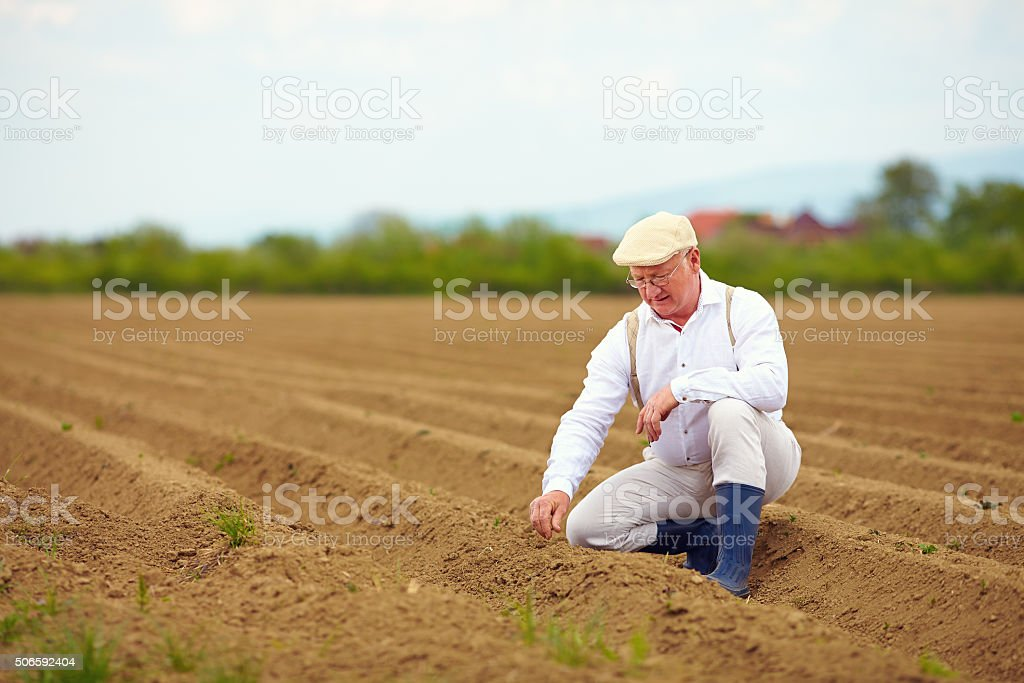 mature man, farmer on arable field, checking the plant growth stock photo