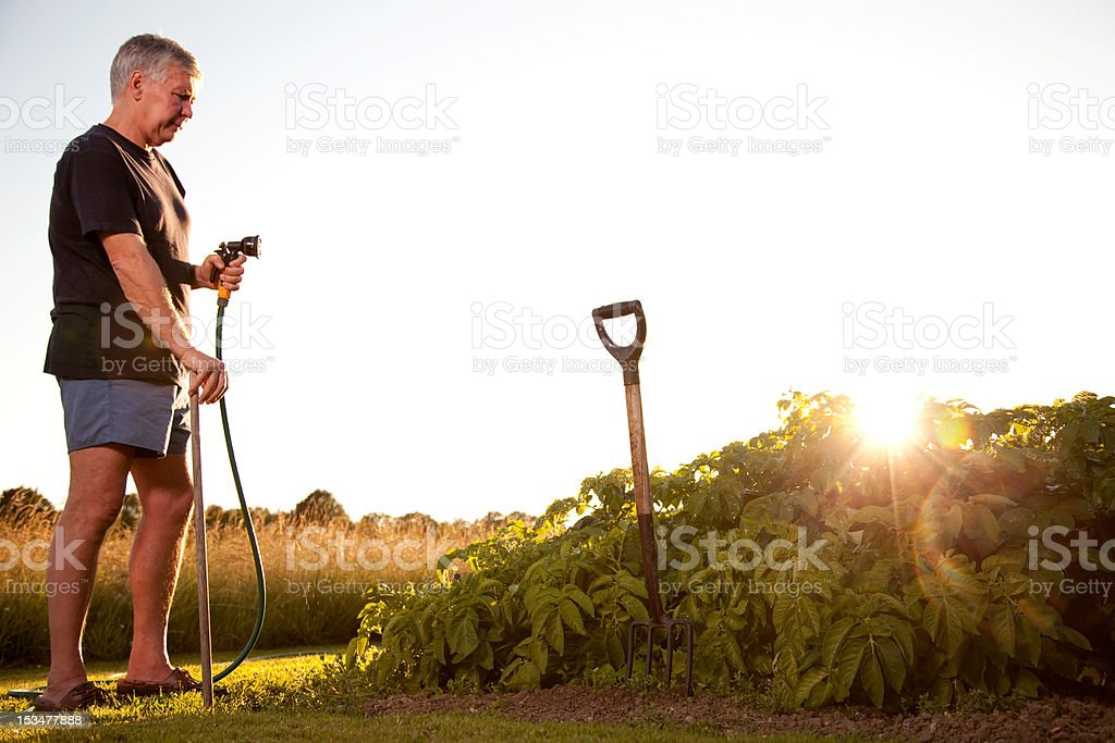 Mature man irrigating vegetables royalty-free stock photo