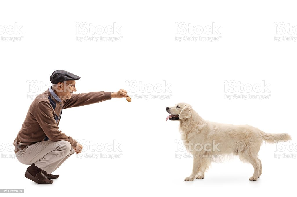 Mature man kneeling and giving a cookie to a dog stock photo