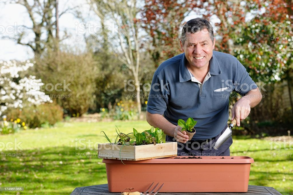 Mature Man Planting Vegetables In The Garden royalty-free stock photo