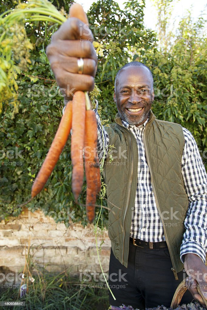 Mature man with organic carrots royalty-free stock photo