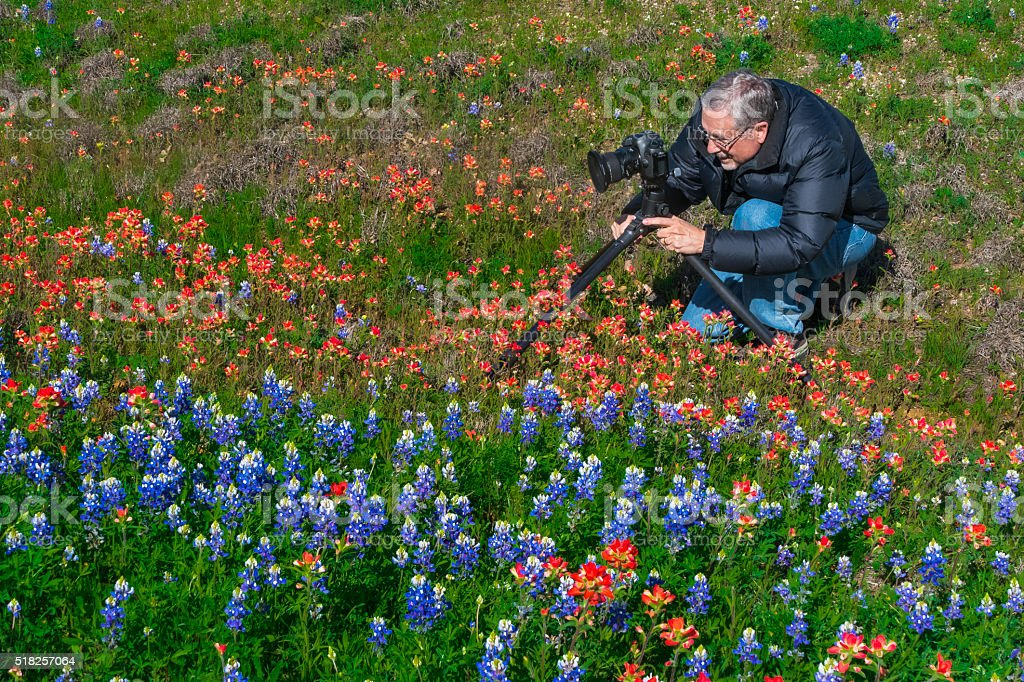 Mature photographer man, wildflowers, bluebonnets, indian paintbrush, texas, hill country stock photo
