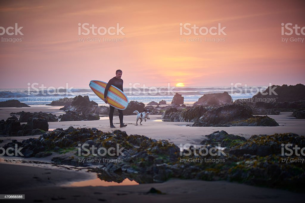 mature surfer leaving the surf at sunset greeted by dog stock photo